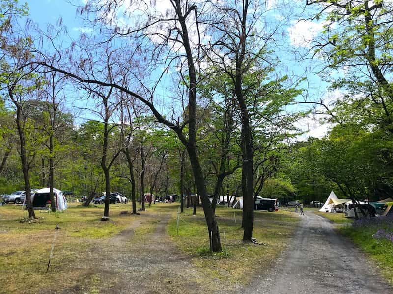 武甲キャンプ場オートキャンプサイト